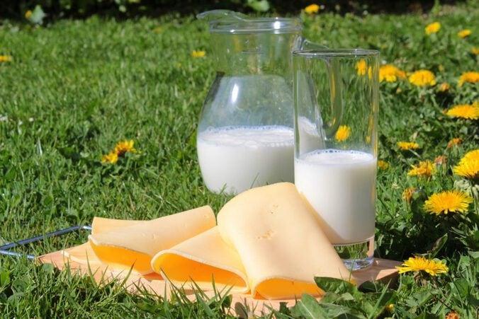 Milch und Käse auf einer grünen Wiese